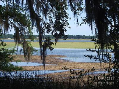 Photograph - Low Country by Michelle Welles