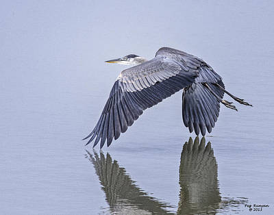 Low Flying Heron Art Print