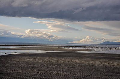 Photograph - Low Tide  by Roxy Hurtubise