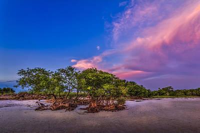 Low Tide Mangrove Art Print