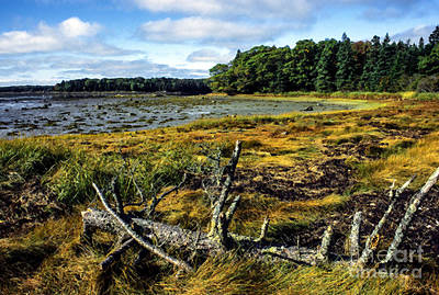 Penobscot Bay Photograph - Low Tide Reach Road by Thomas R Fletcher