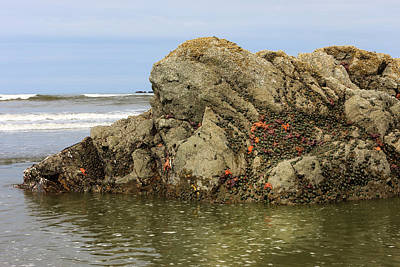 Mussel Wall Art - Photograph - Low Tide Reveals Sea Life by Tom Norring