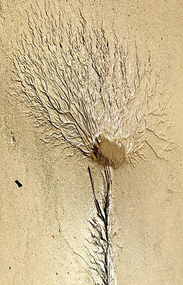 Photograph - Low-tide  Sand Flower by Tammy Schneider