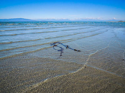 Photograph - Parksville Low Tide Sway  by Roxy Hurtubise