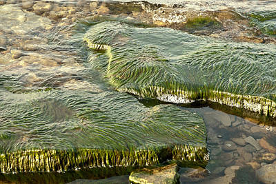 Low Water Algae Art Print