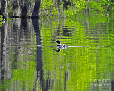 Lowcountry Loon Art Print by Al Powell Photography USA
