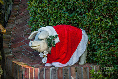 Photograph - Lowcountry Pig by Dale Powell