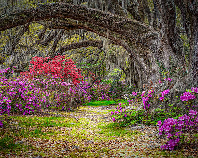 Lowcountry Spring Art Print