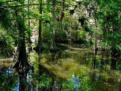 Photograph - Lowcountry Swamp Garden by Jean Wright