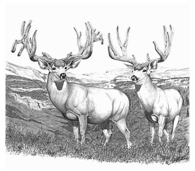 Drawing - Lowe Buck by Darcy Tate