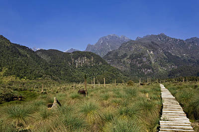 Lower Bigo Bog In The Rwenzori Art Print by Martin Zwick