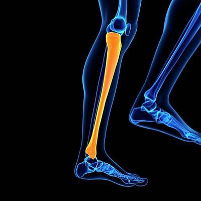 Digitally Generated Image Photograph - Lower Leg Bone by Sebastian Kaulitzki