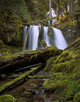 Photograph - Lower Panther Creek Falls by Jon Ares
