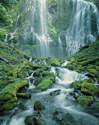 Photograph - 1m5448-lower Proxy Falls - V by Ed  Cooper Photography