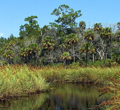 Chiefland Photograph - Lower Suwannee Refuge 2a by Sheri McLeroy