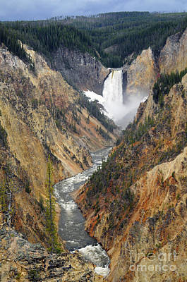 Photograph - Lower Yellowstone Falls by Cindy Murphy - NightVisions