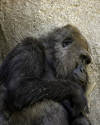 Art Print featuring the photograph Lowland Gorilla by Gary Neiss