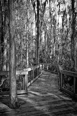 Cypress Swamp Photograph - Loxahatchee Refuge-2 by Rudy Umans