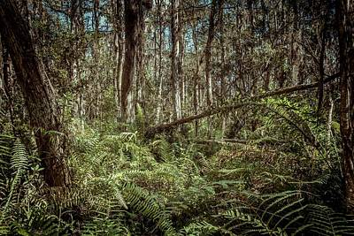 Cypress Swamp Photograph - Loxahatchee Refuge-1 by Rudy Umans