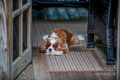 Photograph - Loyal Pup by Dale Powell