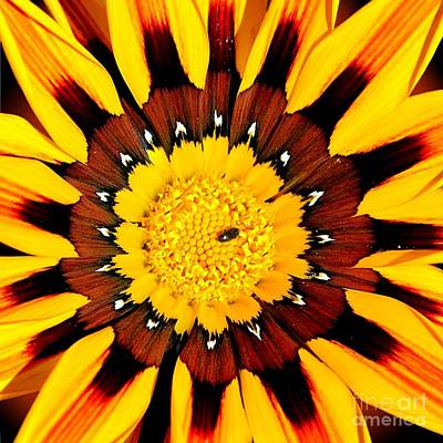 Photograph - Lucid Daisy by Third Eye Perspectives Photographic Fine Art