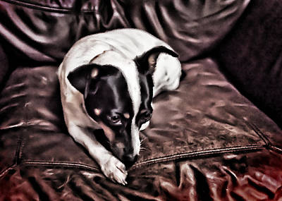 Rat Terrier Photograph - Lucie On Leather by Patrick M Lynch