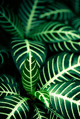 Photograph - Lucious Leaves by Marilyn Hunt