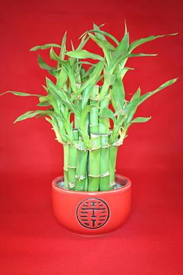 Luck Bamboo Art Print