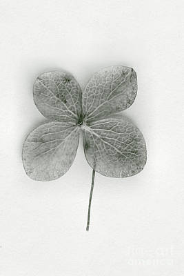 Good Luck Photograph - Luck by Margie Hurwich