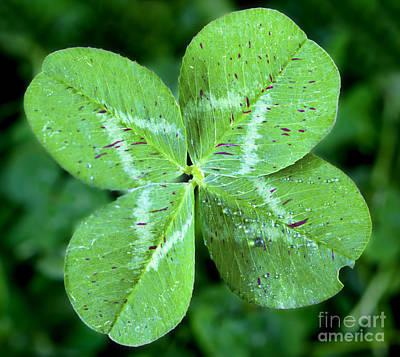 Good Luck Photograph - Lucky Clover by Brandon Alms