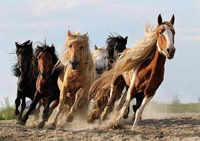 running horses photographs fine art america