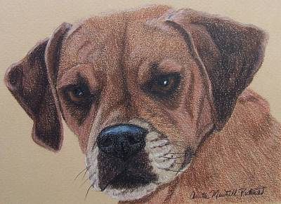 Drawing - Lucy-puggle Commission by Anita Putman