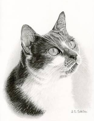 House Pet Drawing - Lucy by Sarah Batalka