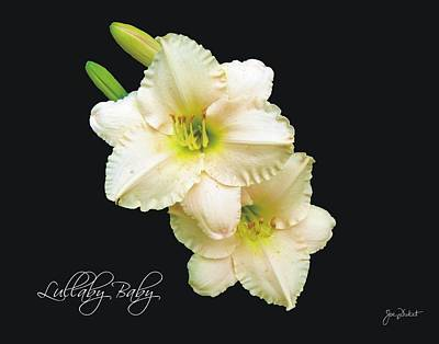 Photograph - Lullabye Baby Daylily by Joe Duket