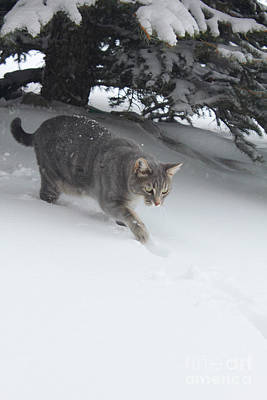 Photograph - Lulu Plays In Snow by Donna Munro