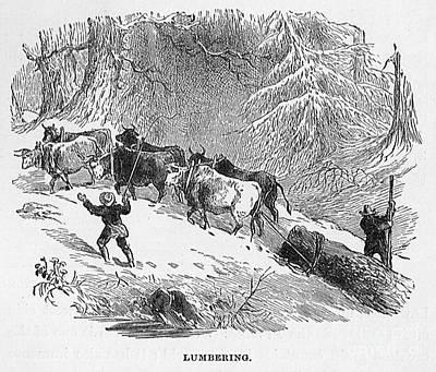 Lumbering - 1878 Art Print