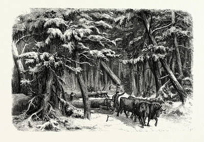 Lumbering In New Brunswick Art Print