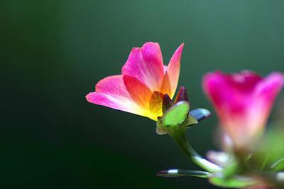 Photograph - Luminous by David Weeks