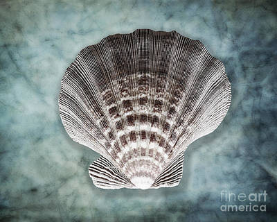 Luminous Fan-shaped Shell  Art Print