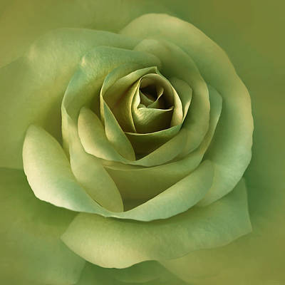 Photograph - Luminous Green Rose Flower by Jennie Marie Schell
