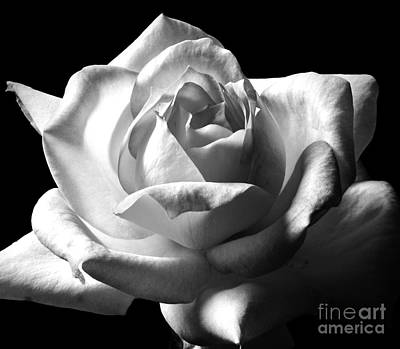 Photograph - Luminous In Monochrome by Chalet Roome-Rigdon