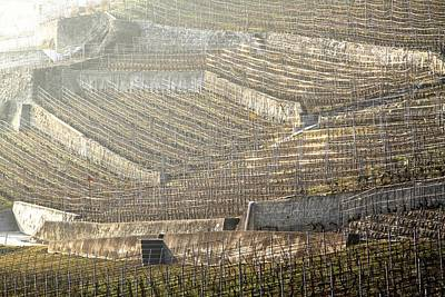 Luminous Lavaux Vineyards  Art Print by Colleen Williams