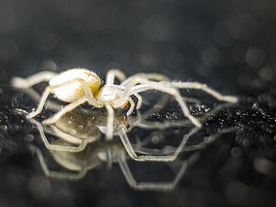 Photograph - Luminous Spider by Carl Engman