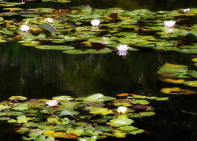 Photograph - Luminous Water Lilies by Carla Parris