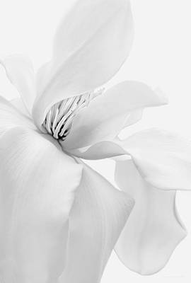 Photograph - Luminous White Magnolia Flower Monochrome by Jennie Marie Schell
