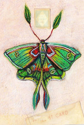 Luna Mixed Media - Luna Moth by Amy Norden