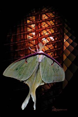 Photograph - Luna Moth by Ericamaxine Price