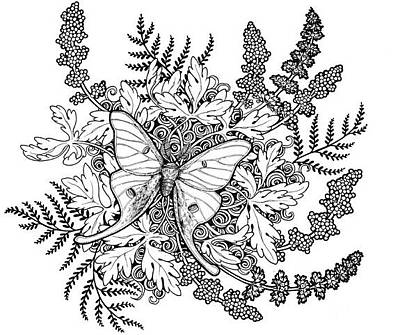 Luna Moth Drawing - Luna Moth Line Work by Erin Vaganos