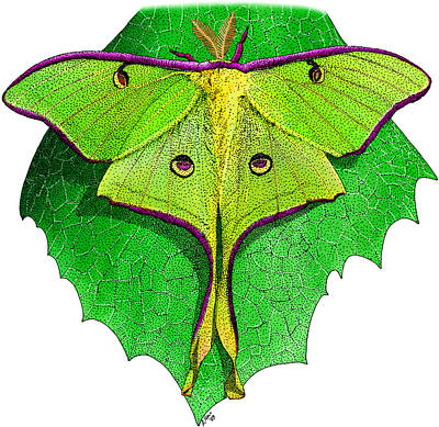Photograph - Luna Moth by Roger Hall