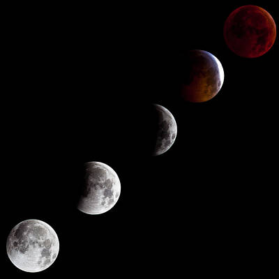 Craig Brown Photograph - Lunar Eclipse by Craig Brown